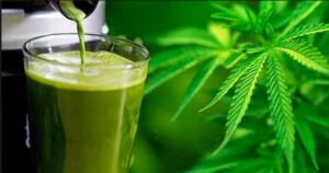 Raw Cannibis Juice